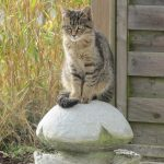 Fontaine chat